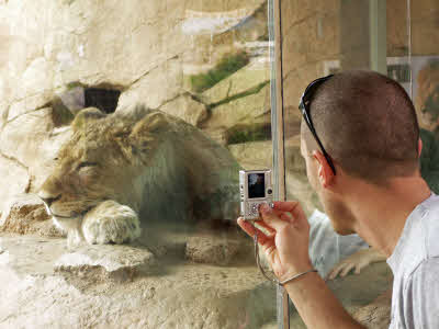 Chris taking a picture of a lion