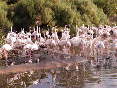 flamingos in Heart of Africa