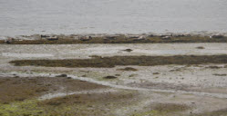 low tides and seals
