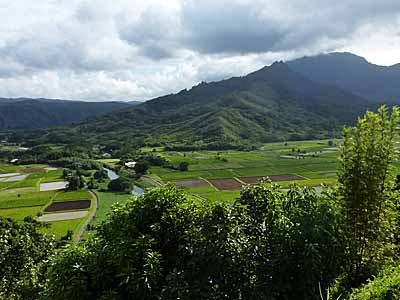 View of Rice Mill and Taro fields