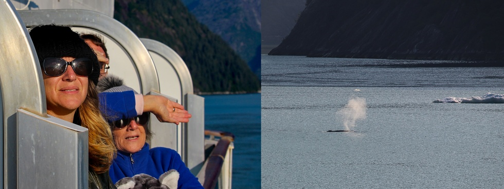 Wale watching in Tracy Arm